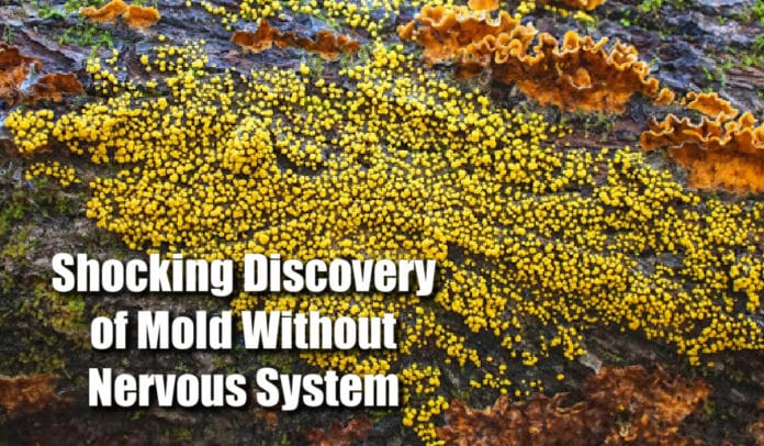 Mold Without Nervous System