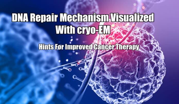 cryo-EM Visualization Of DNA Repair